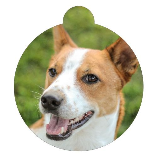Basenji Picture ID tag